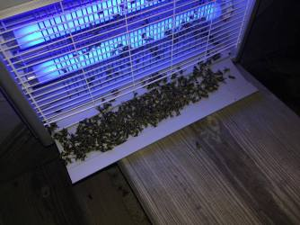 Ohuhu Bug Zapper The Best I Ve Ever Used We Used That